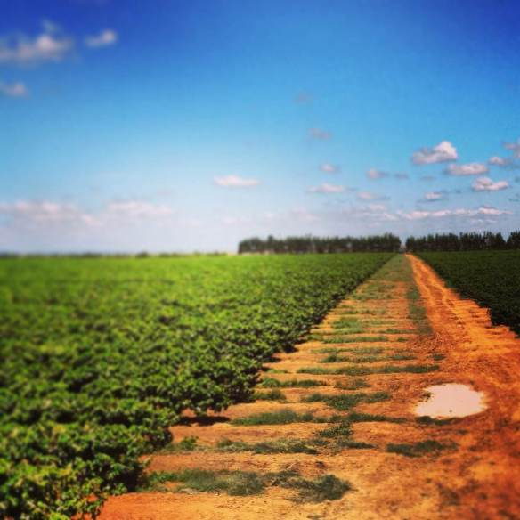 A coffee farm in Minas