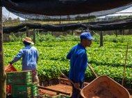 Coffee Farming Brazil