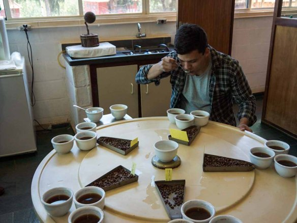 Daterra Coffee Tasting