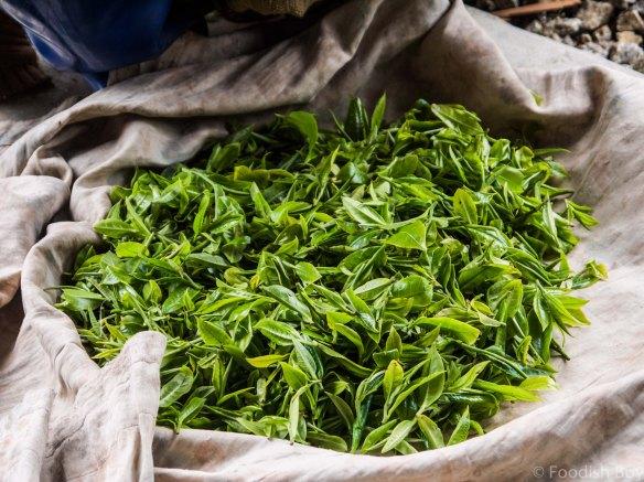 Darjeeling Foodish Boy-12