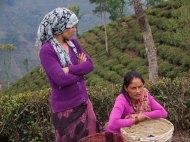 Darjeeling Foodish Boy-13